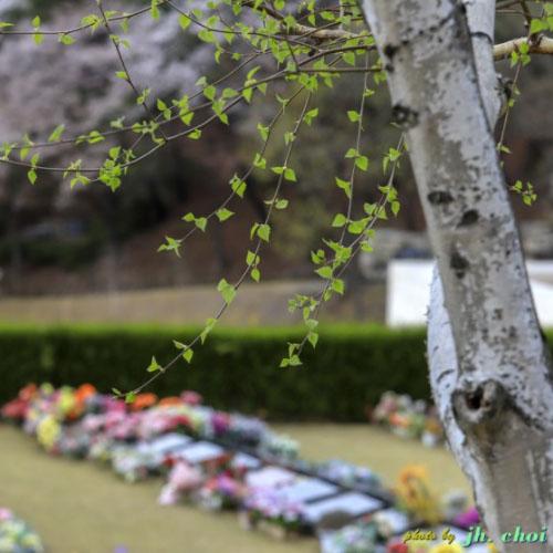 분당 메모리얼 파크의 봄